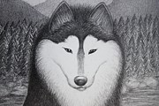 Huskies Drawings Prints - Winter Print by Kim Viola
