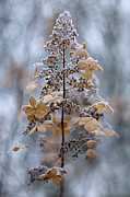 Winter Flower Photos - Winter Lace by Jacky Parker
