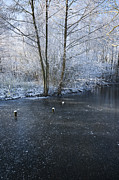 Snowy Stream Posters - Winter Lake Poster by Svetlana Sewell