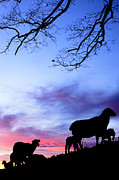 January Prints - Winter Lambs and Ewes Sunrise Print by Thomas R Fletcher