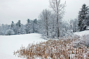 Winter Landscape Print by Aimee L Maher