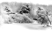 Fir Trees Posters - Winter Landscape Black and White Poster by Julie Palencia