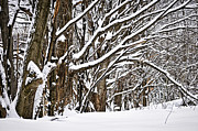 Winter Trees Metal Prints - Winter landscape Metal Print by Elena Elisseeva