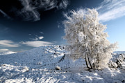 Snow Scene Photos - Winter Landscape by Grant Glendinning