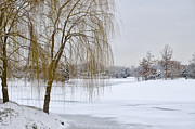 Willow Tree Posters - Winter Landscape Poster by Julie Palencia