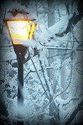 Winter Storm Mixed Media - Winter Light by Stephanie Leidolph
