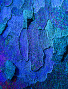 Colourful Bark Prints - Winter London Plane Tree Abstract 4 Print by Margaret Saheed