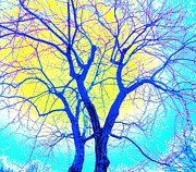 Winter Marriage Of Two Trees Print by Ann Johndro-Collins