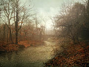 Winter Mist Print by Jessica Jenney