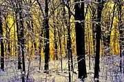 Alight Acrylic Prints - Winter Mood Lighting Acrylic Print by Robert Harmon