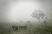 Winter Morning Londrigan 5 Print by Linda Lees