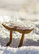 Macro Work - Winter mushrooms by Mircea Costina Photography