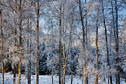 Christian Lagereek - Winter Nature Ans Scenery