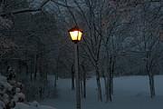 Paul SEQUENCE Ferguson             sequence dot net - Winter Night