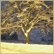 Snowy Night Metal Prints - Winter Night - Snowy Tree Metal Print by Jutta Wolfram