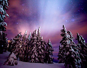 Snow Scenes Metal Prints - Winter Nights Metal Print by Darren  White