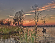 Waccamaw River Prints - Winter on the Waccamaw River Print by Mike Covington