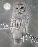 Nina Bradica Framed Prints - Winter Owl Framed Print by Nina Bradica