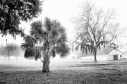 Dixie Framed Prints - Winter Palmetto Framed Print by Scott Hansen
