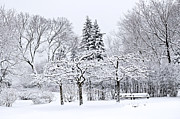 Winter Trees Metal Prints - Winter park landscape Metal Print by Elena Elisseeva
