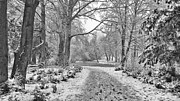 John Adams Prints - Winter path Print by John Adams