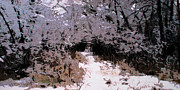 larry Guterson - Winter Path