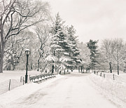 Central Park Winter Prints - Winter Path - Snow Covered Trees in Central Park Print by Vivienne Gucwa