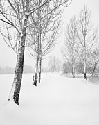 Snowfalling Framed Prints - Winter Path Framed Print by Theresa Tahara