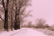 Snowy Road Posters - Winter Pink Poster by Carol Groenen