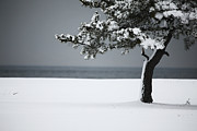 Snow-covered Landscape Framed Prints - Winter Quiet Framed Print by Karol  Livote