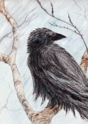Raven Drawings Originals - Winter Raven by Amanda Ellis