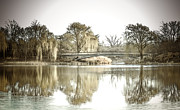 Earthy Water Prints - Winter Reflection Landscape Print by Julie Palencia