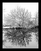 David E Lester Posters - Winter Reflections 1 Poster by David Lester