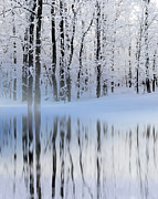 Andrea Kollo Metal Prints - Winter Reflections Metal Print by Andrea Kollo