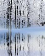 Winter Reflections Print by Andrea Kollo
