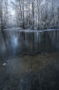 Frozen River Posters - Winter Reflections Poster by Svetlana Sewell