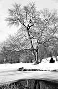 Connecticut Winter Framed Prints - Winter Reflects in Black and White Framed Print by Karol  Livote