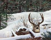 Winter Rest Print by Karen Cade