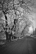 Winter Roads Framed Prints - Winter Road BW  Framed Print by  Chalet Roome- Rigdon