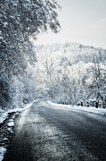 Winter Road In Forest Print by Elena Elisseeva