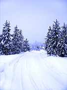 Braches Prints - Winter Road Print by Lane Erickson