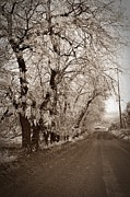 Winter Roads Prints - Winter Road Sepia Print by  Chalet Roome- Rigdon