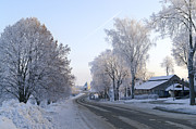 Winter Scenes Rural Scenes Prints - Winter road surrounded by icy trees Print by Dmitry Manakhov