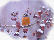 Daphne Sampson - Winter Robin