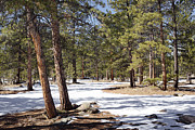 Winter Scene Metal Prints - Winter Scene Metal Print by Ernie Echols
