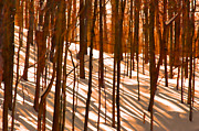 Andrea Kollo Metal Prints - Winter Shadows Metal Print by Andrea Kollo