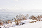 Park Scene Photo Framed Prints - Winter shore of lake Ontario Framed Print by Elena Elisseeva