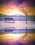 Puddle Prints - Winter Skies Reflected Print by Tara Turner