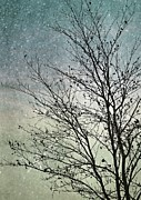 Delicate Metal Prints - Winter Sky Metal Print by Janice Austin