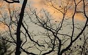 Lois Lepisto - Winter sky